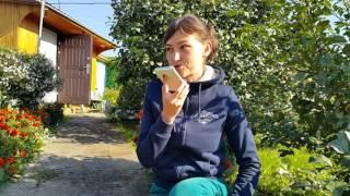 Собеседование И снова работа в полях Анна Васильева