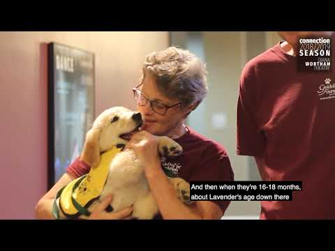 Guide Dogs at Diana Wortham Theatre