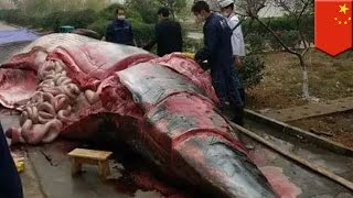 Whale slaughter  Dead 8 ton whale butchered outside office building in Jiangxi, China   TomoNews