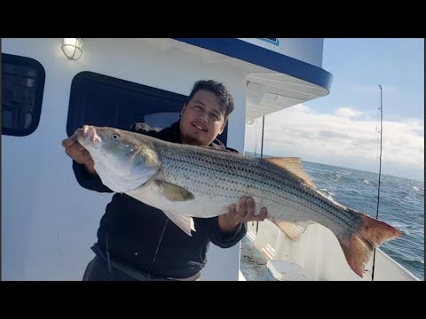 Striped Bass On The Party Boat (captree Pride) Lock N Load Fishing!