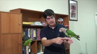 How to Hold a Parrot - Step Up and Grab