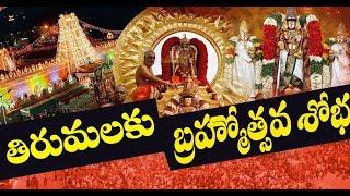 శ్రీవారి  సాలకట్ల బ్రహ్మోత్సవాలకు ముస్తాబవుతున్న తిరుమల | Eyetv Entertainments