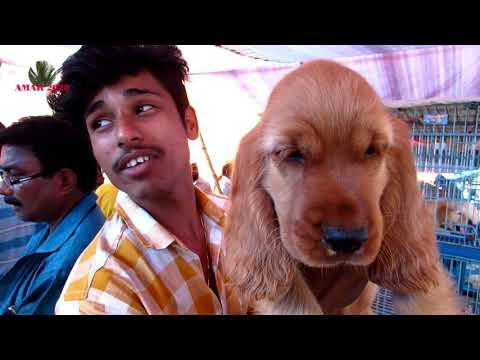 CUTE DOG PUPPY AT GALIFF STREET PET MARKET KOLKATA INDIA | 28TH OCT 2018 | SELLER CONTACT NO