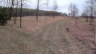 Dodger Hunting 1.mts