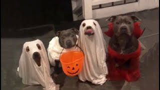 Bork or Treat