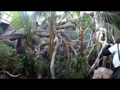 Lincoln Park Zoo 02 18 2017 Regenstein African Journey