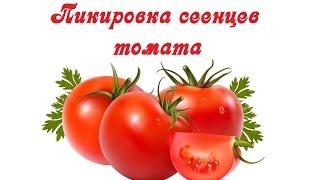 Пикировка сеенцев томатов(Как я провожу пиковку томатов смотрите в этом видео Моя группа в Вконтакте https://vk.com/club94877598., 2016-04-12T17:45:19.000Z)