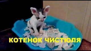 ✅ Котенок сам ходит в лоток/Малышу 1 месяц и 3 дня