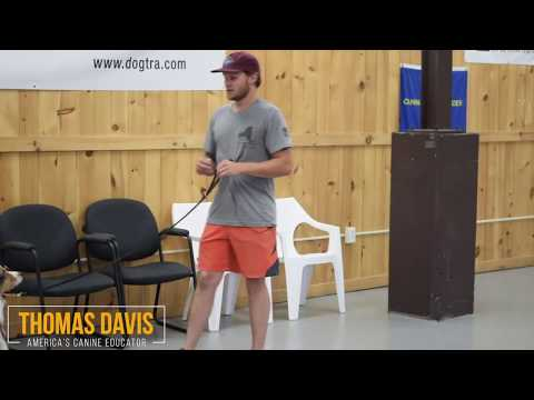 Using a prong collar or e collar, when and why - saving dogs with America's Canine Educator-