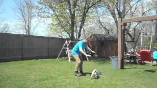 Pug Barking At The Shadow Moving