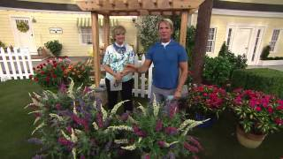 Cottage Farms 3-pc. Flutterby Multi-Color 3-in-1 Butterfly Bush with Carolyn Gracie