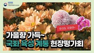 올 가을 최신 유행 국화들이 한 자리에~❕ (feat.…