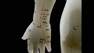 Meridian Points in Acupuncture