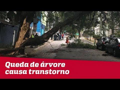 Queda De árvore Causa Transtorno Na Zona Sul De SP