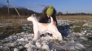 Собака из снега. Как сделать фокстерьера из снега. Снежный пёс. Символ года 2018.