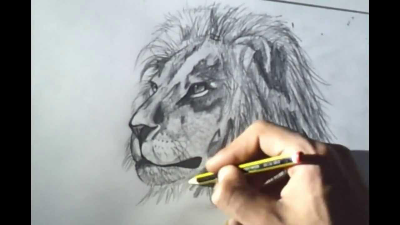 Como Dibujar Un León