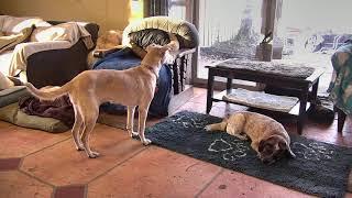 Senior Dog Gathering Room Cam 12-11-2017 12:49:40 - 13:49:41