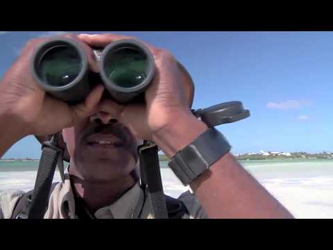 Birding in The Islands Of The Bahamas