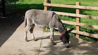 The Donkey Sanctuary, Devon! (2019)