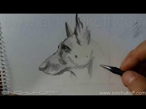 Рисуем портрет овчарки