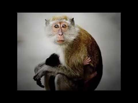 Monkey Wallpaper monkey wallpaper - youtube