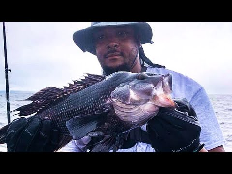Sea Bass And Porgy Fishing On The Fin Chaser