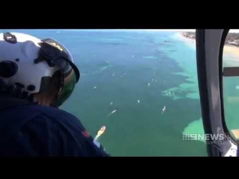 Glenelg Shark   9 News Adelaide