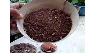 How to set pot for germination ..!!