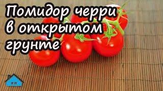 Помидор черри в открытом грунте(В этом видео мы рассказываем об опыте выращивания помидор черри. Выращиваем ее мы в открытом грунте при..., 2016-07-28T17:19:52.000Z)