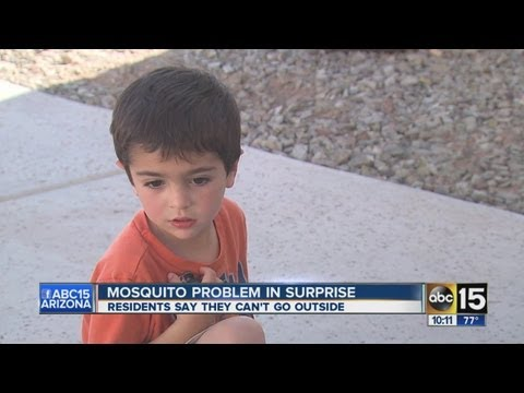 Mosquito problem out of control for Surprise neighborhood