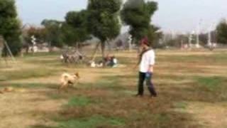 雑種犬「風(ふう)」が、パパの合図で ジャンプして、手に持っているデ...
