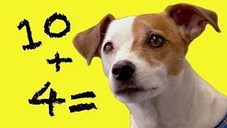 Dog Does Maths   Extraordinary Animals   BBC Earth