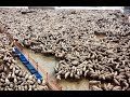 How to Harvesting Wool ? - Remove Wool from Sheep & Wool Processing in Factory