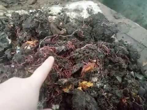 Вопрос: Как самостоятельно соорудить червятник?