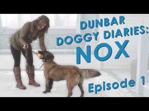 Dunbar Dog Diaries  #1 - Real Time Dog Training
