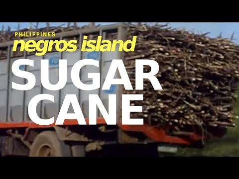 Negros Island: Mecca for Massive Sugar Cane