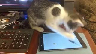 Супер кот играет в планшет