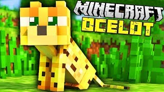 Minecraft 1.11. КАК ПРИРУЧИТЬ КОТА ОЦЕЛОТА. Выживание 40. Майнкрафт прохождение