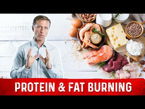 Understanding Protein in Relationship to Fat Burning