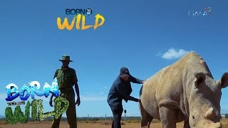 Born to Be Wild: Could science save Najin and Fatu from extinction?