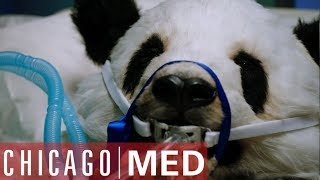 Dr Rhodes Operates On A Panda | Chicago Med
