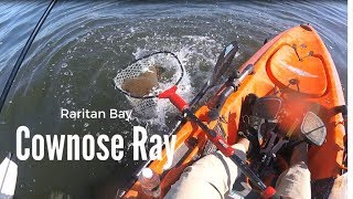 Cownose Ray and Flounder Kayak Fishing