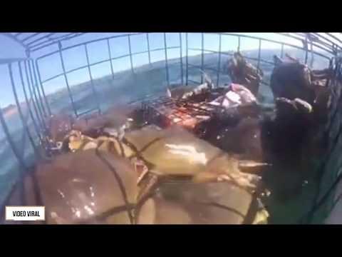 Cara Menangkap Kepiting Di Laut