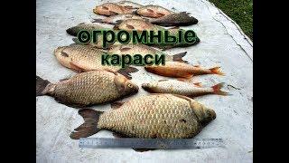 Большой Сунгуль 11.09.19 Рыбалка на Огромного Карася от 1.5 до 2 кг.
