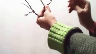 How to Wire a Bonsai Tree | Bonsai wiring Tips | Easy way to wire bonsai - with Eng Subtitle