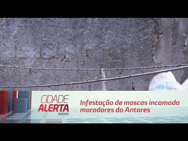 Infestação de moscas incomoda moradores do Antares
