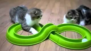 طرائف القطط..  قطط مضحكة جداً... شاهد واضحك بس