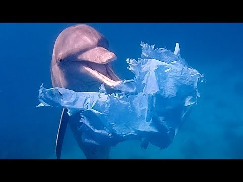Dolphins Playing with Plastic Bags | Blue Planet Live | BBC Earth