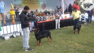 Rottweiler Speciality- Pune | Results+Comments | Judge Mr.C.V Sudarshan | Dogs99.com