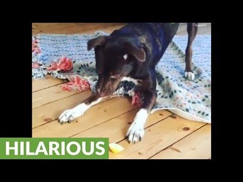 Hilarious puppy has brilliant reaction to lemon